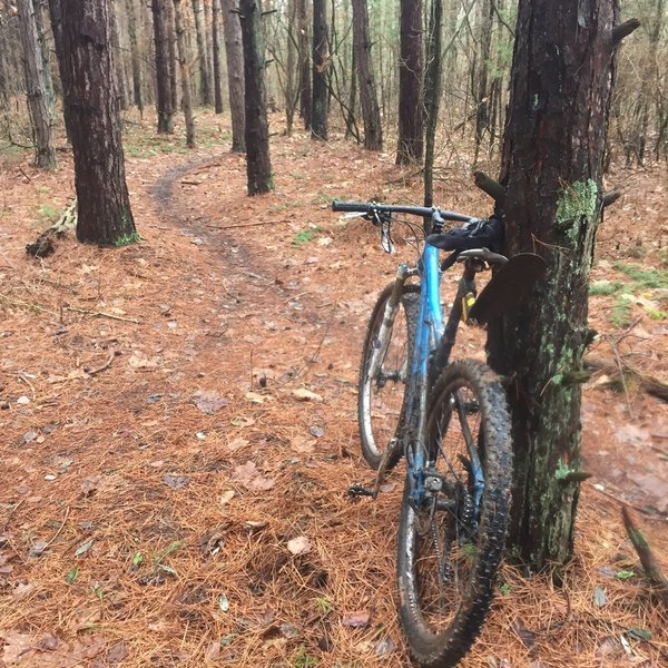 Pine Course Start - nice circuit course in the pines.