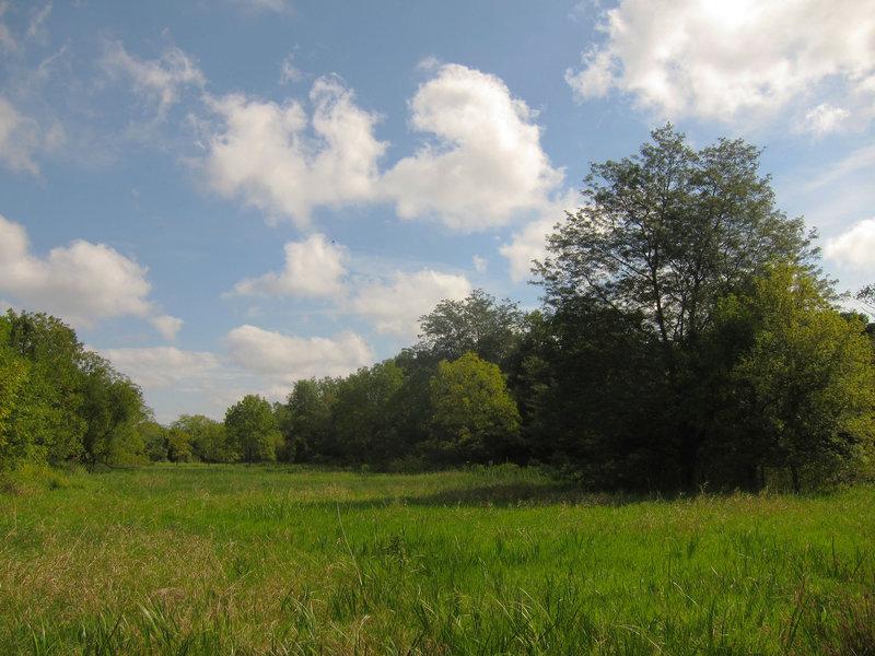 Meadow at Six Mile Run