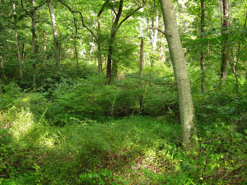 Forest at Six Mile Run