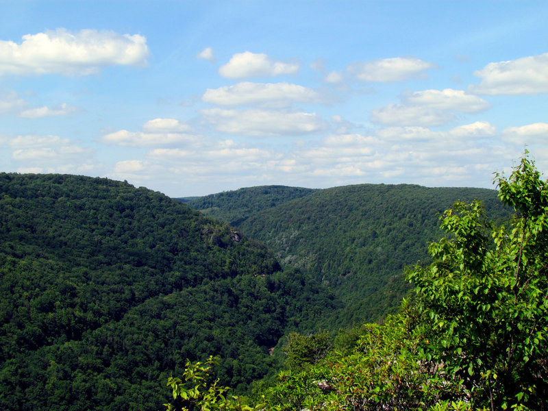 Lindy Point Blackwater State Park WV