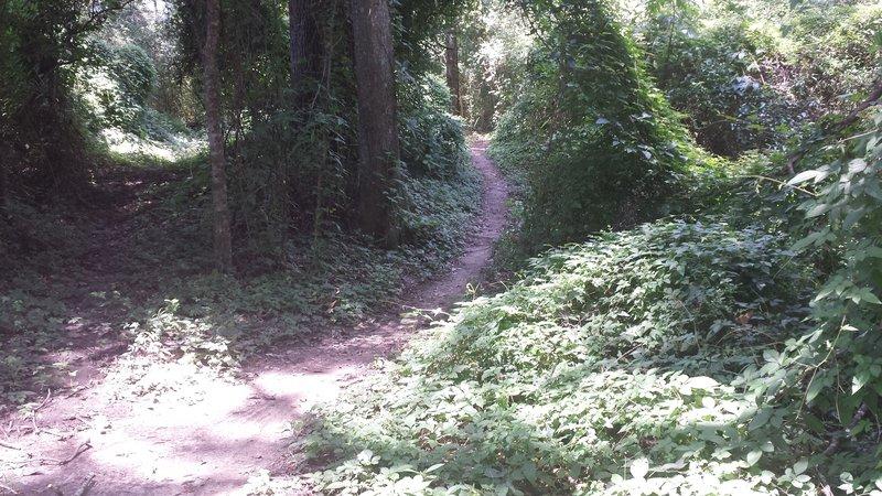 Quick descent through the woods.
