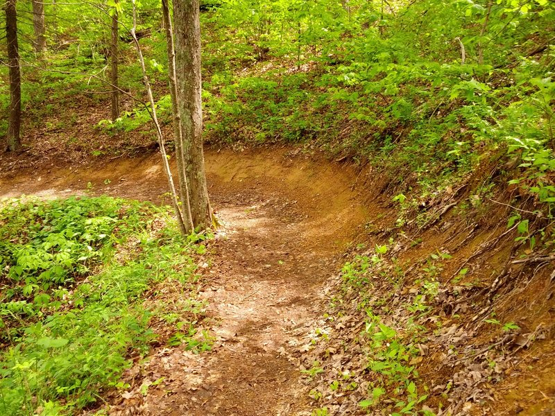 Berm on Pinnacle Mountain Tower Trail