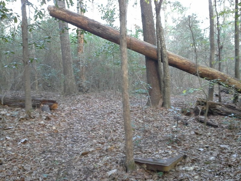 Fallen log along the trail.  Cool feature.