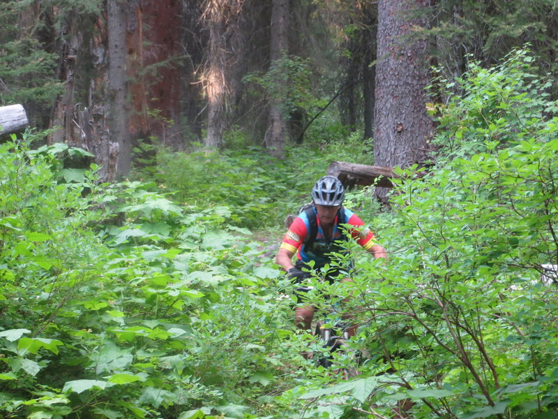 Once the upper trail is dry enough to ride, it gets hard to find- in Blodgett Canyon