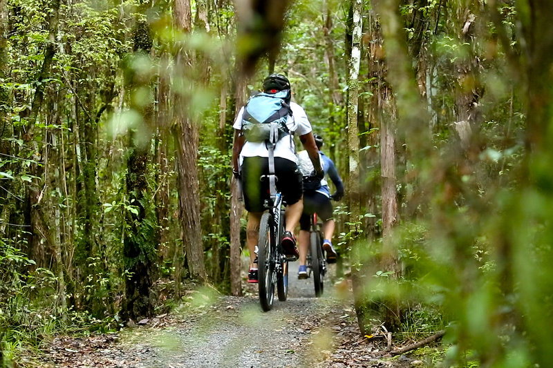 Jungle-y cruising on mellow terrain