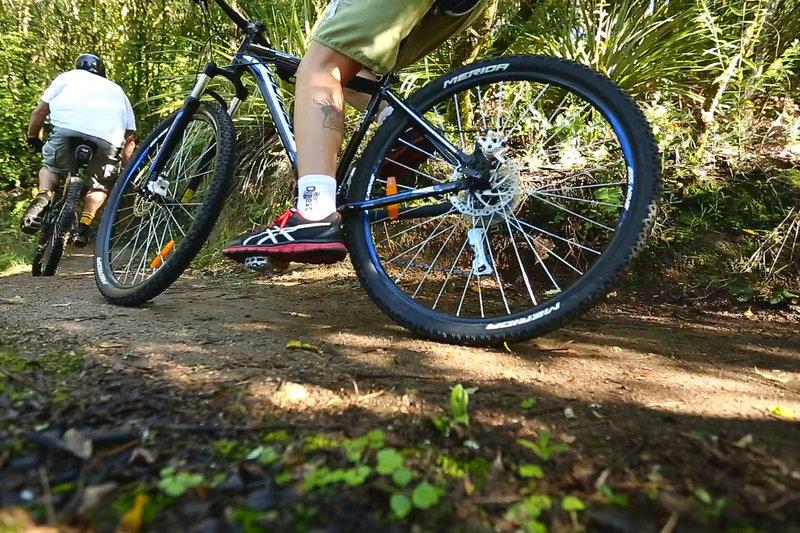 Near the top of the Orakau mountain bike trail