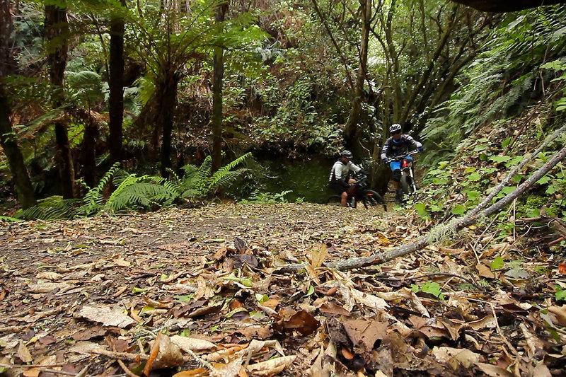 Climbing up the K2K mountain bike trail from Kawakawa Bay