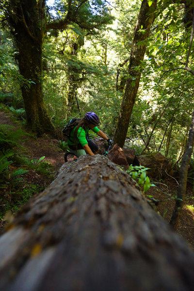 Get used to big logs on the Te Iringa trail