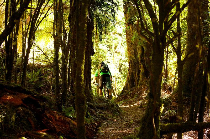 Moss galore on the Te Iringa trail