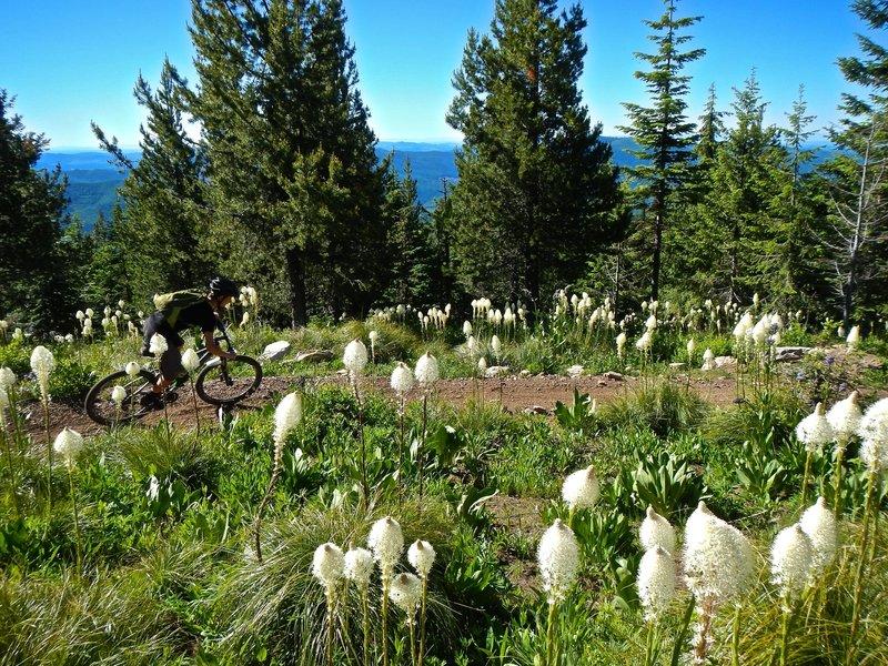 Bald Mountain, just below the lookout beginning Beason Meadows Trail