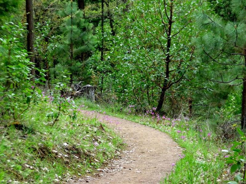 Typical trail conditions at Britt Woods, photo courtesy landconserve.org