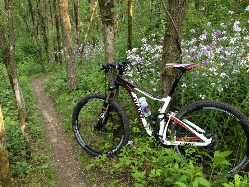 Springtime flowers in bloom beside the sweet singletrack in Rolling Hills Park