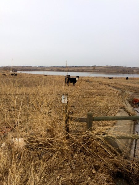 Rock creek is still a working farm, while preserved by Boulder County as open space.