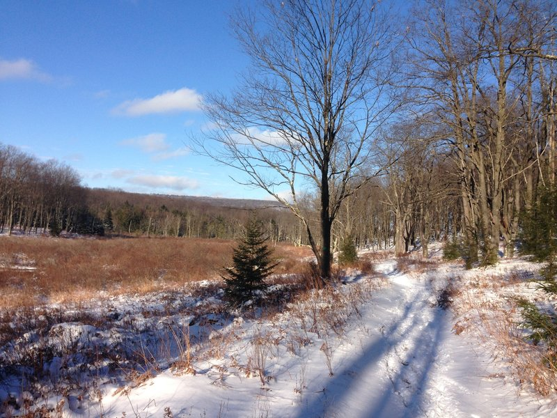 Middle Ridge Trail next to headwaters of Blackwater River