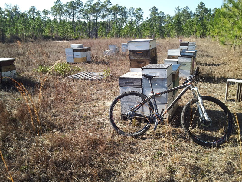 Bee hives! Not something you see along the trail every day.