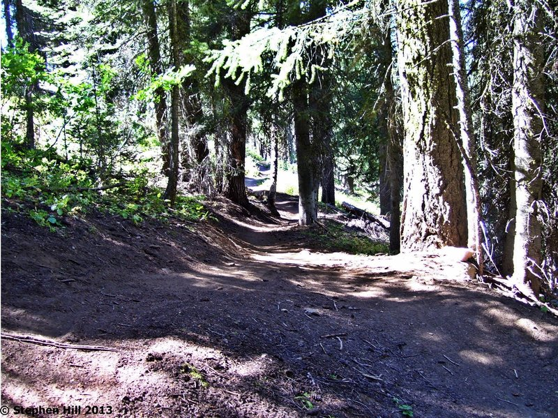 One of the faster sections of Elk Trail.