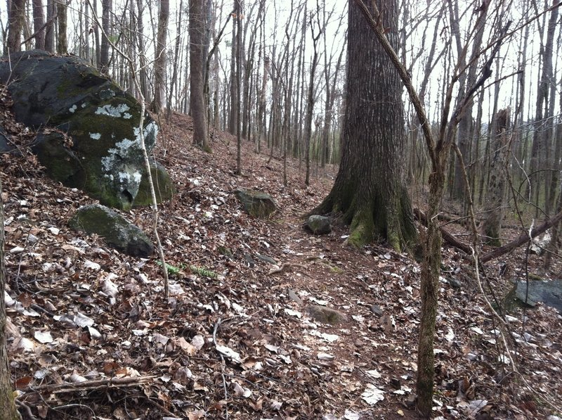 Narrow navigation by one of the few large boulders on the property.