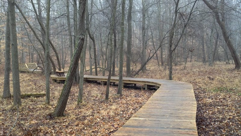 Boardwalk spanning the flood plain of Massey Creek on the South Branch Loop.