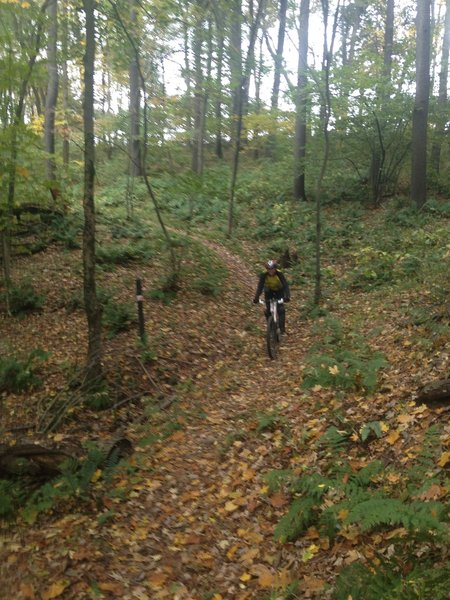 Yellow Creek - Riding in the fall on Handlers Long Haul Trail.