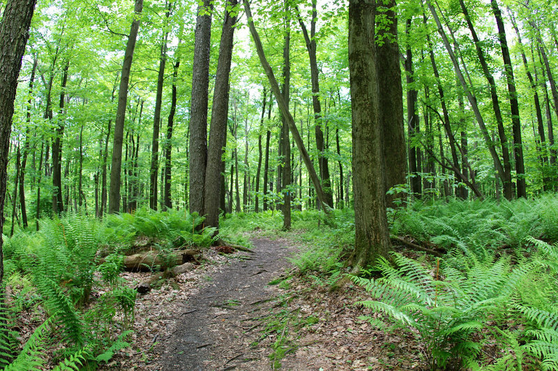 Follow the Wolf Rocks Trail