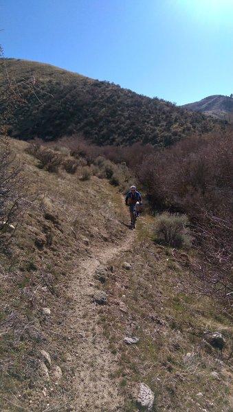 Descending Willow Creek