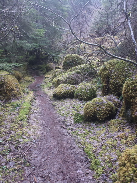 Gorgeous moss covered rock sections dotted the trail.