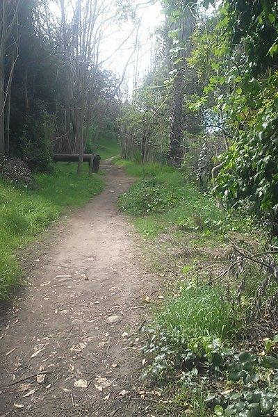 Arroyo Seco Trails. Beautiful scenery and great terrain!