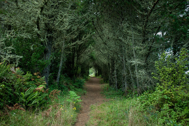 Tree tunnel on the Inverness Ridge trail