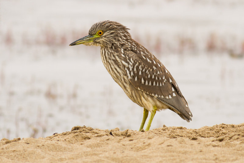 Bird watching at Abbotts Lagoon