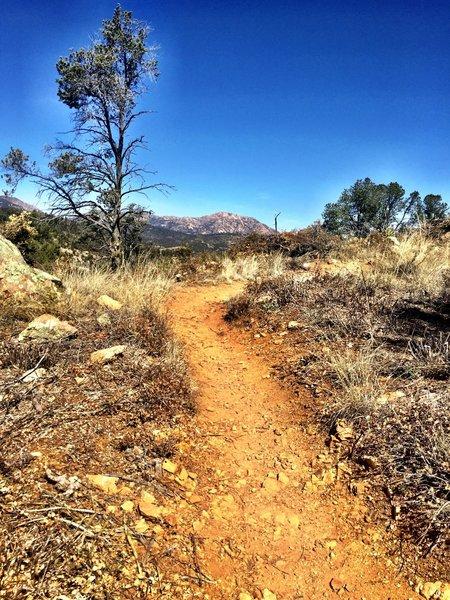 Granite Mountain from Trail 317 - Ridge Top Trail