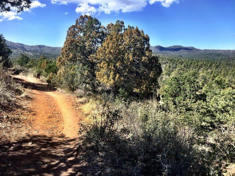 Open scenery on Trail 318