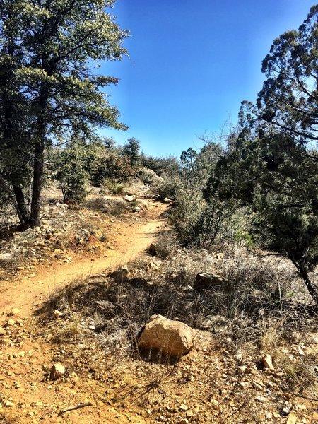 Trail 315 typical terrain