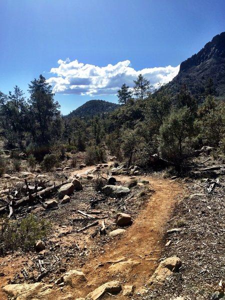 Trail 315
