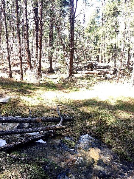 Trail 391 creek crossing