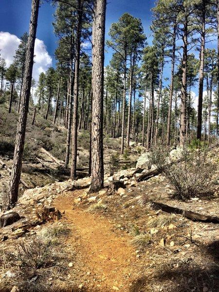 Trail 391