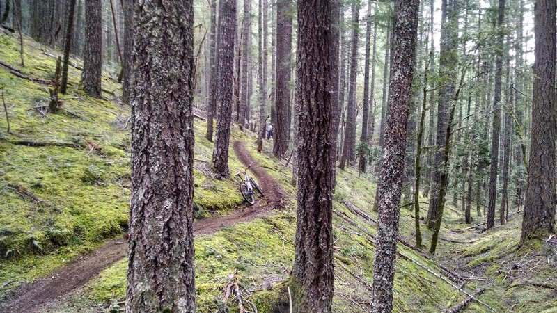 First time on lower Taylor Creek trail. Perfect flowy singletrack.