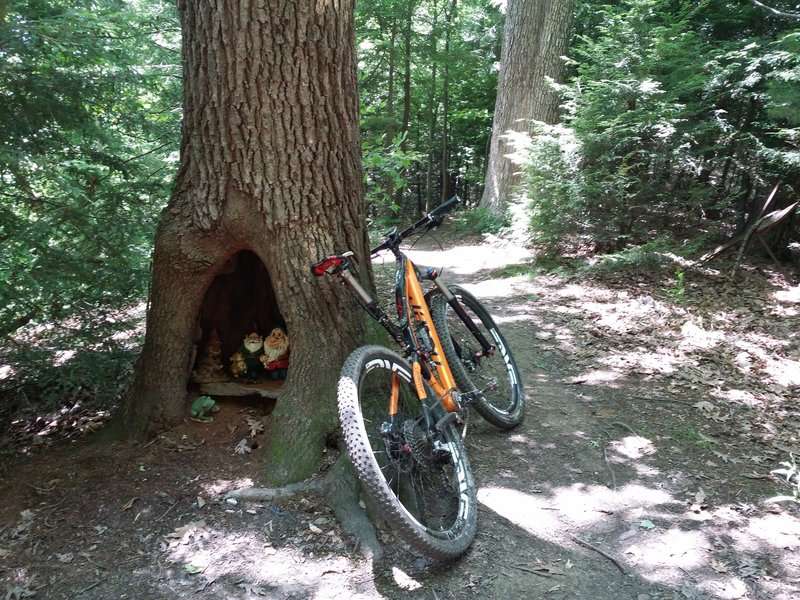 Always great to see the gnomes on Mohican State Park MTB Trail.  They provide a nice energy boost!
