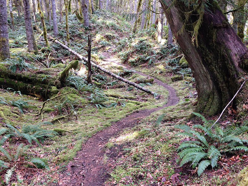 Perfect curves on the Lewis River trail!