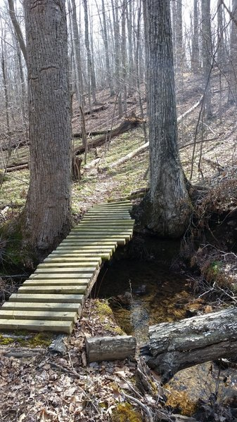 One of the stream crossings on the Burning Biscuit Trail