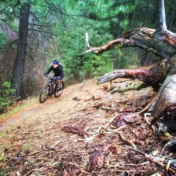 Riding in the pines is a nice contrast to most Boise trails.