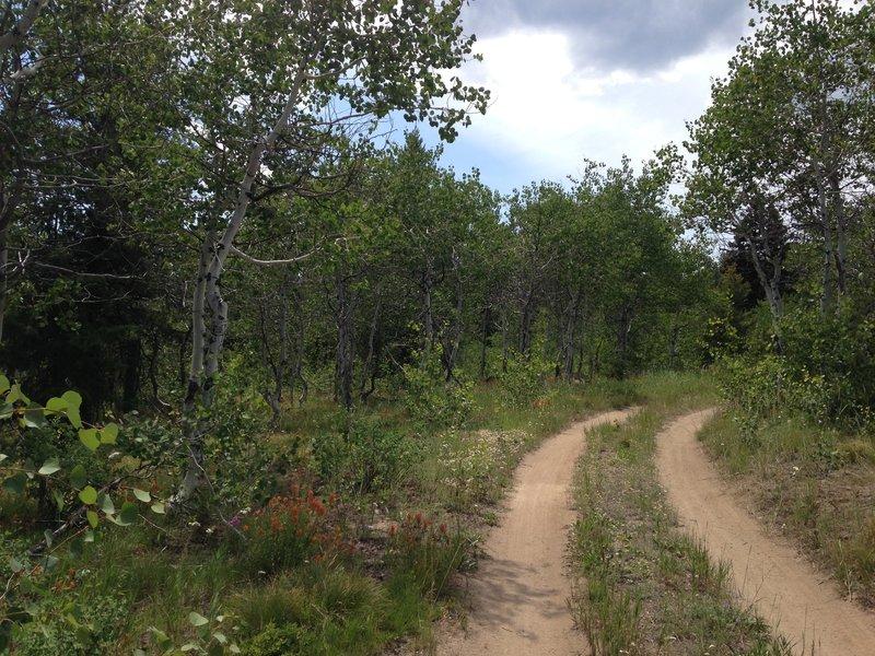 Banner Ridge Trail