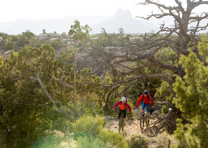 The North Rim trail has plenty of forested sections and views of Zion National Park.