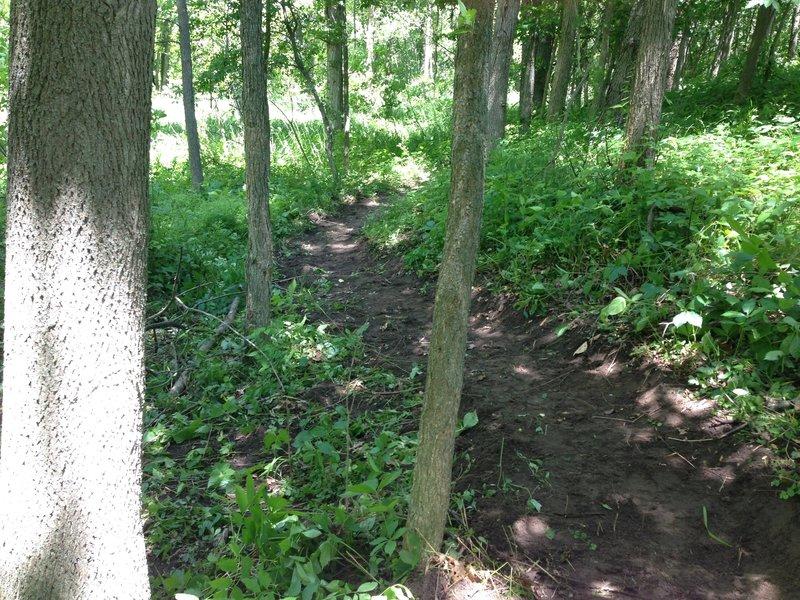 Fresh trail - Burchfield Advanced MTB Loop