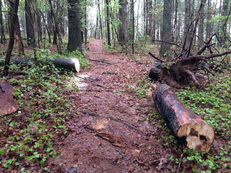 Local bike club keeping the trail clear.