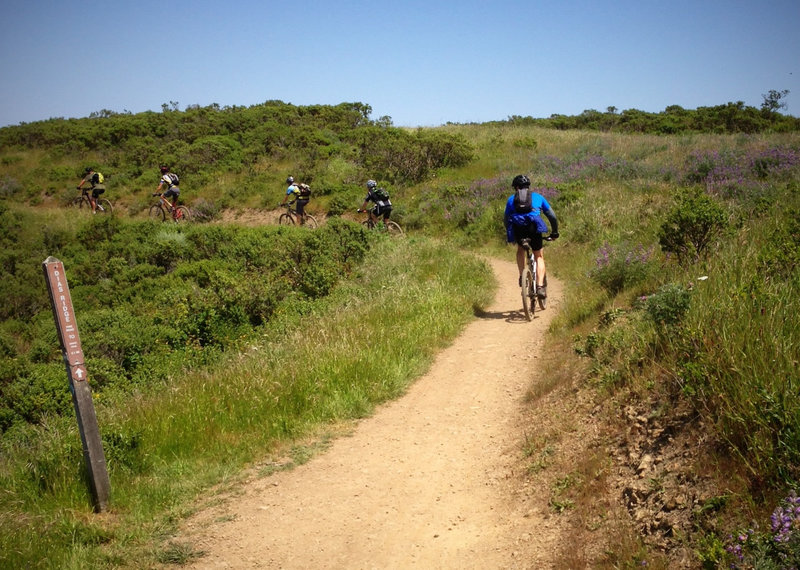 At the Miwok Trail junction
