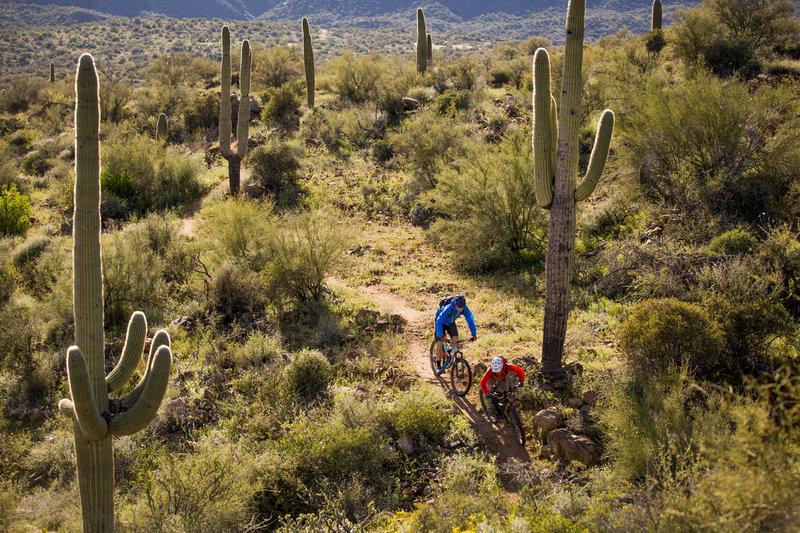 The Bumble Bee segment of the Black Canyon trail has an abundance of giant saguaros.