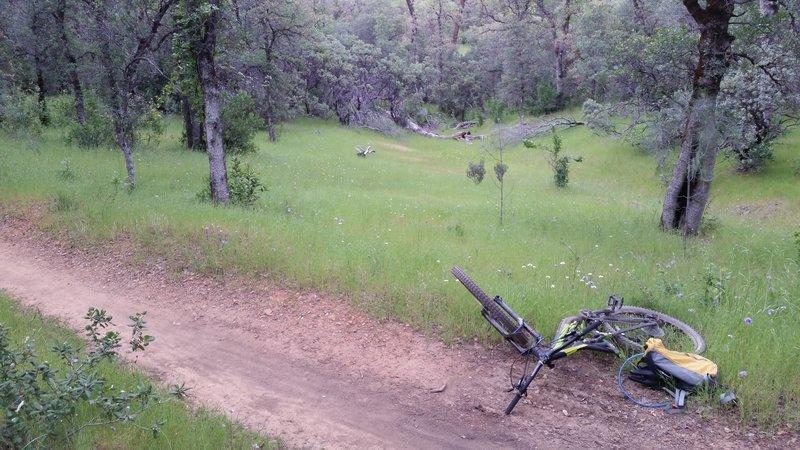 Beautiful meadows on Mule Mountain Trail
