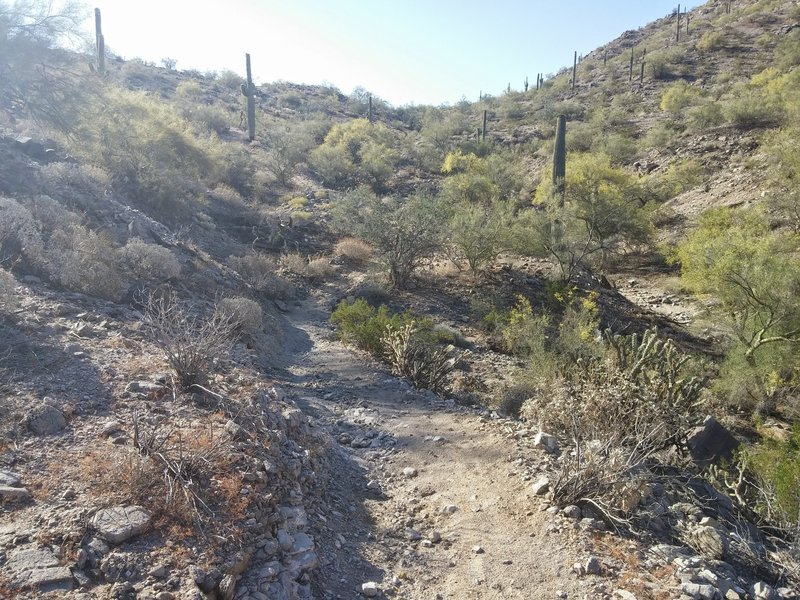 Toothaker Trail, between the cactus
