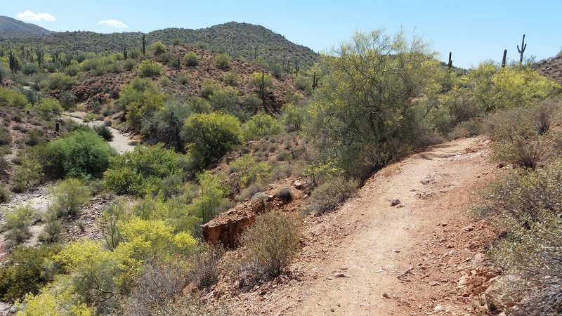 View looking south along side a creek bed.