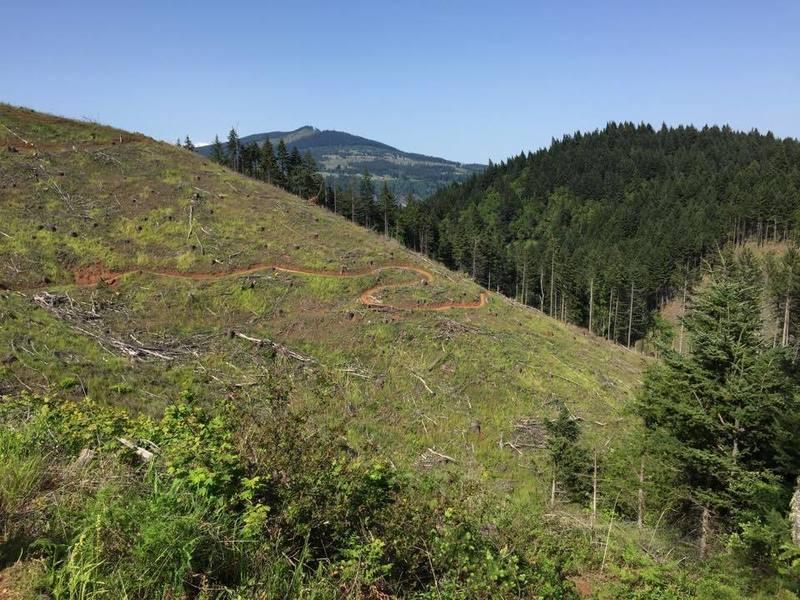 Great fresh cut trail